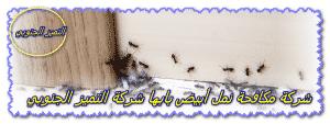 شركة مكافحة النمل ابيض بابها