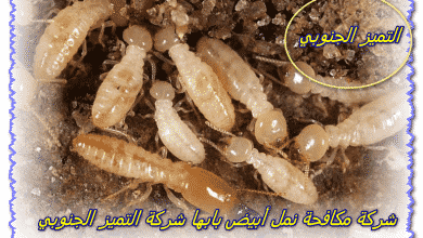 Photo of شركة مكافحة نمل ابيض بابها 0509056373 مع الضمان والخصم إتصل بنا الأن