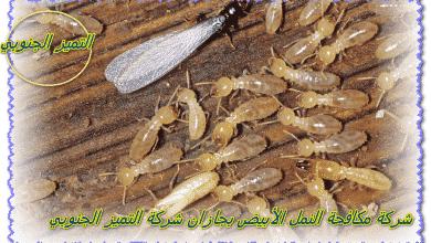Photo of شركة مكافحة نمل ابيض بجازان 0509056373 مع الضمان والخصم